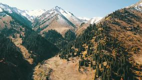 Autumn landscape in the mountains. Snowy peaks, yellow-green grass, orange-red bushes and green conifers. Blue sky without clouds. On the hills lie big stones stock footage