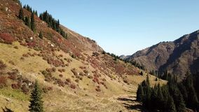 Autumn landscape in the mountains. Snowy peaks, yellow-green grass, orange-red bushes and green conifers. Blue sky without clouds. On the hills lie big stones stock video