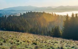 Autumn landscape in mountains. Spruce forest on a grassy hill. glowing fog in the distant valley. wonderful scenery at sunrise royalty free stock photo
