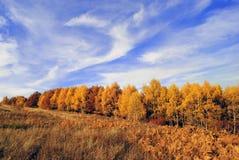 Autumn landscape. Multicolour birch forest in autumn Royalty Free Stock Photo