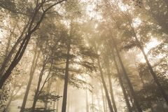 Autumn landscape with mysterious foggy fairytale forest. Royalty Free Stock Photo