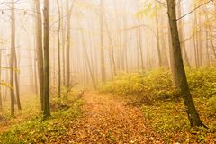 Autumn landscape with mysterious foggy fairytale forest. Royalty Free Stock Images