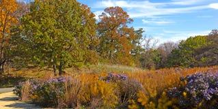 Autumn landscape in National Arboretum, Washington DC, USA. Royalty Free Stock Photography