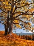Autumn landscape Stock Photography