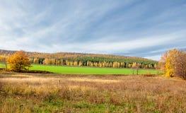 Autumn Landscape Natura a foglia larga e mista moderata della foresta fotografie stock libere da diritti