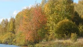 Autumn landscape of nature on the river with yellow leaves close-up. Close-up stock video