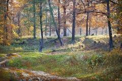 Autumn landscape, oak forest, morning Royalty Free Stock Photos
