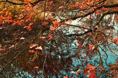 Autumn landscape with oak tree branches over the dry old pond Royalty Free Stock Photography
