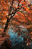 Autumn landscape with oak tree near the old pond Royalty Free Stock Photo
