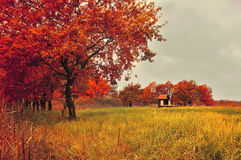 Autumn landscape with oak trees and lonely house in cloudy weather Stock Photos