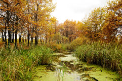Autumn landscape with oak trees near the pond Stock Image
