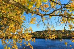 Autumn Landscape och flod Dee i Aberdeen Fotografering för Bildbyråer