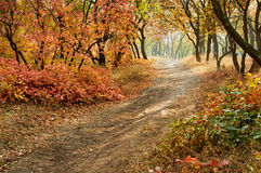 Autumn landscape October Royalty Free Stock Photography