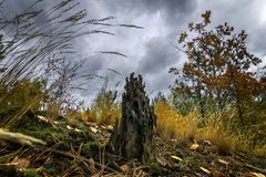 An old rotten stump surrounded by grass, moss and trees. Autumn landscape. An old rotten stump surrounded by grass, moss and trees Royalty Free Stock Photo
