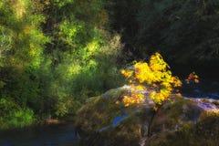 Autumn Landscape op McKenzie stock fotografie