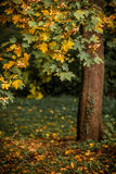Autumn landscape with orange autumn oak tree in the field Royalty Free Stock Photos