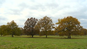 Autumn landscape with orange autumn oak tree in the field. stock video footage