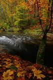 Autumn landscape with orange and yellow leafs above dark creek in czech national park Royalty Free Stock Image