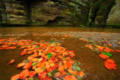 Autumn landscape with orange and yellow leaves in the water, big rock in the background, Kamenice river, in czech national park, C Stock Photography