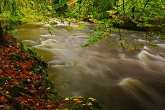 Autumn landscape with orange and yellow leaves in the water, big rock in the background, Kamenice river, in czech national park, C. Eske Svycarsko, Czech Royalty Free Stock Images