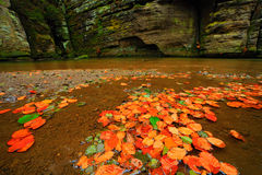 Autumn landscape with orange and yellow leaves in the water, big rock in the background, Kamenice river, in czech national park, C. Eske Svycarsko, Czech Stock Photography