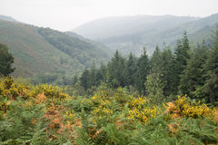 Autumn landscape over foggy Dartmoor National Park in England Stock Images