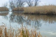 Autumn Landscape Overwoekerd met rietbank van de Dnieper-Rivier, Zaporizhia-gebied, de Oekraïne stock afbeelding