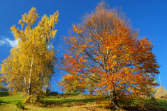 Autumn landscape panorama Stock Image