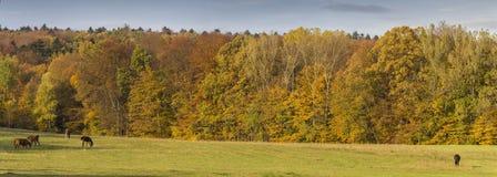 Autumn Landscape Panorama With Horses Imagen de archivo
