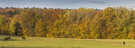 Autumn Landscape Panorama With Horses Stock Image