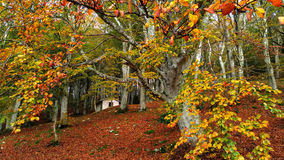 Autumn landscape panorama of a scenic forest Stock Photo
