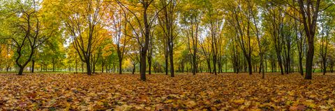 Autumn landscape. panoramic view. fallen leaves in the city park Stock Image