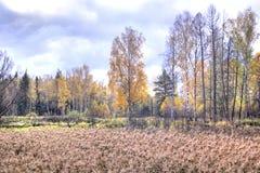 Autumn Landscape pantano Imagen de archivo