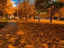 Autumn Landscape Parc avec les feuilles dispersées Fond saturé orange l'ukraine image libre de droits
