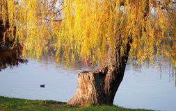 Autumn landscape in the sunset light Royalty Free Stock Photos