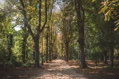 Autumn landscape. Autumn in the park, alley of trees royalty free stock photos