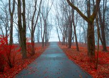 Autumn landscape - autumn park alley with trees and dry fallen orange autumn leaves in cloudy day. Autumn November landscape - cloudy autumn park alley with bare royalty free stock images