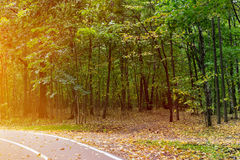Autumn landscape in park Royalty Free Stock Photos