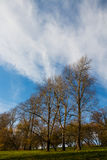 Autumn landscape, park, countryside, trees on hill with yellow foliage, bright blue sky, light clouds Stock Image