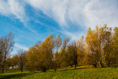 Autumn landscape, park, countryside, trees on hill with yellow foliage, bright blue sky, light clouds Stock Photo
