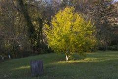Autumn Landscape Park in de Herfst Bos in de herfst Eenzame mooie de herfstboom Oude boom stock fotografie