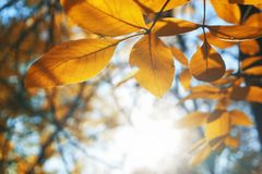 Autumn landscape park. Fall tree leaves background.  stock photography