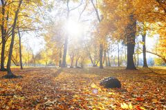 Autumn landscape park. Fall tree leaves background.  royalty free stock photos