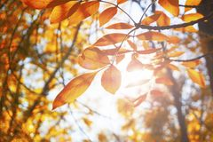 Autumn landscape park. Fall tree leaves background.  stock photos