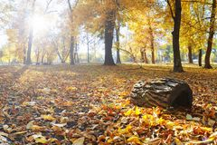 Autumn landscape park. Fall tree leaves background.  royalty free stock image