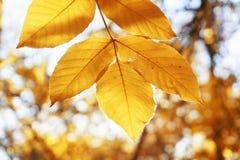 Autumn landscape park. Fall tree leaves background.  stock photo