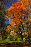 Autumn landscape in the park. Solar autumn landscape in the park Stock Images