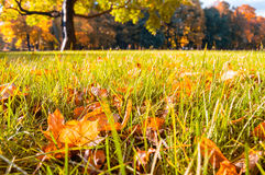 Autumn landscape - park in the sunlight with autumn leaves on the foreground Stock Photos