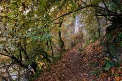 Autumn landscape. Path along trees, rocks and cliff. Autumn landscape in warm colors. Path along trees, rocks and cliff Royalty Free Stock Image