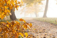 Autumn Landscape with a path and fog Royalty Free Stock Image
